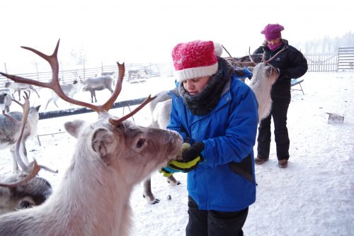 A reindeer gets a feed from Zach